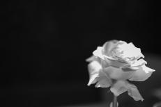 Blanc (197)
