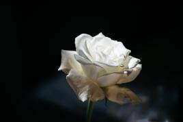 Blanc (23)